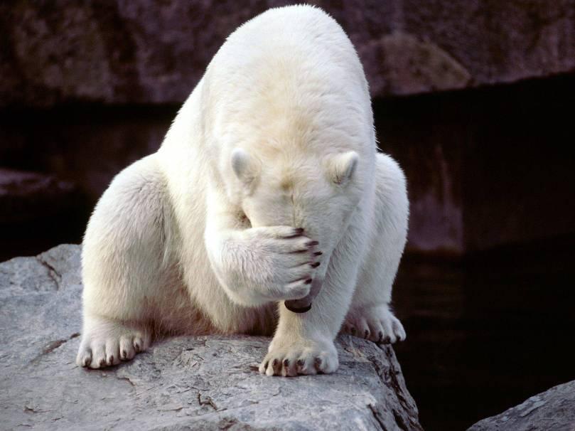 embarrassed-bear